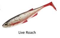 Live Roach