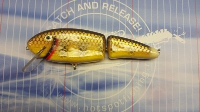 Perch Yellow Belly